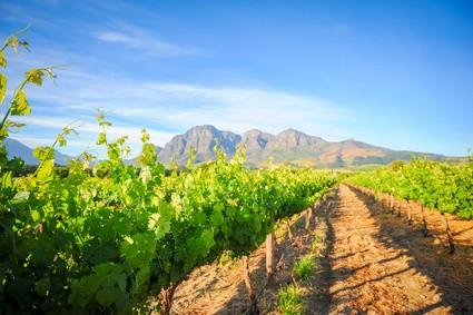 Südafrika Weinprobe 22. Januar 2021 - Eintrittskarte